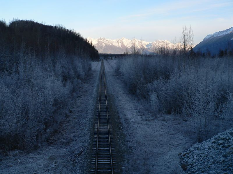 Ice clings to these trees along an Alaska Railroad R-O-W
