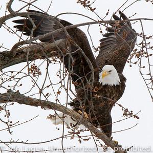 Eagles and Farmland