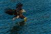 Eagle Flyover