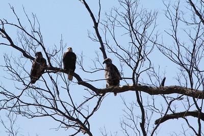 Eagles safari 3-27-11