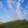 Bear Tree Hill