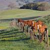 Upper Meadow gang