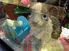 156-Bunny_Lynbrook_KL