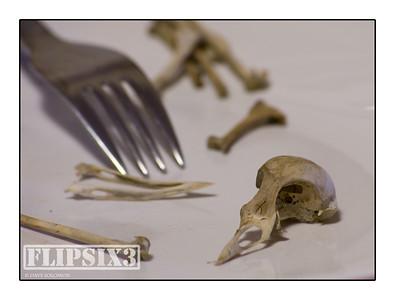Bird Food #1