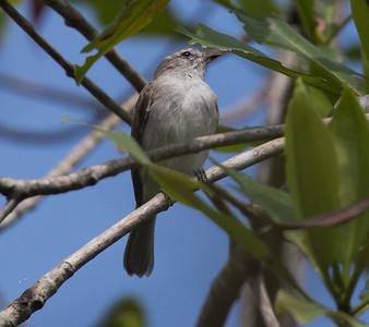 check name  Manglares Churute Ecological Reserve Ecuador 2016 06 11 -1.CR2-2.CR2