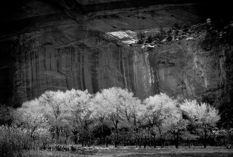 Waiting For Spring_Capitol_Reef-1842  ©Ed Hansen