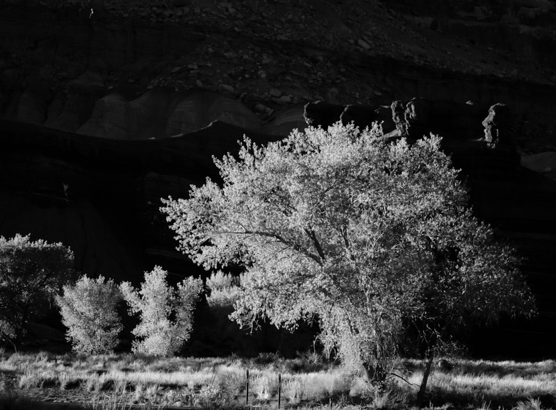 Early_Spring_Capitol_Reef1-2442  ©Ed Hansen