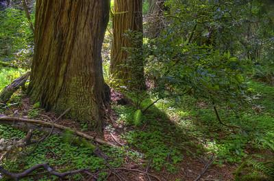 in muir woods