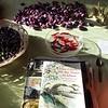 Feuerbohnen zum Trocknen und Chillies