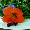 Ruccolasalat mit Blüten