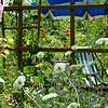 Gartenansicht mit Wilden Möhren und Stockrose im Hochsommer