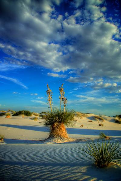 Triple Yucca