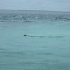 Snorkeling Current Cut