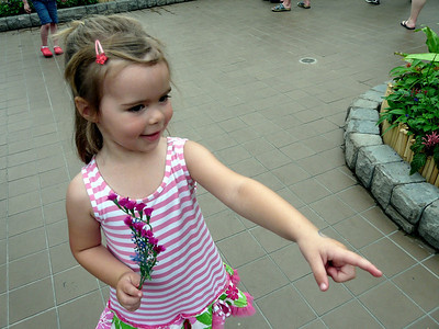 Ellise Butterfly Show May 2010