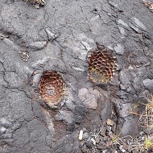 Fruit that the lava has molded to via Instagram http://instagram.com/p/c_PWquBIXT/