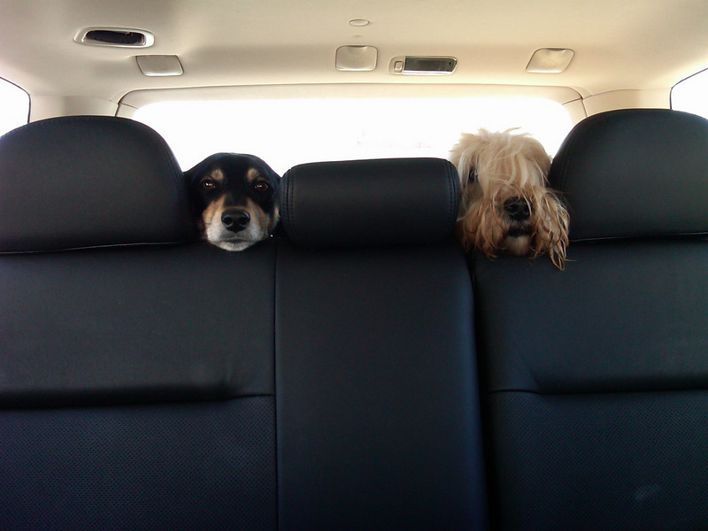 charlie and zoe .. backseat drivers