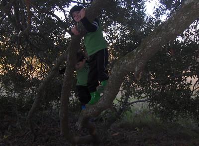 gHPIM2785 Gabe Tree