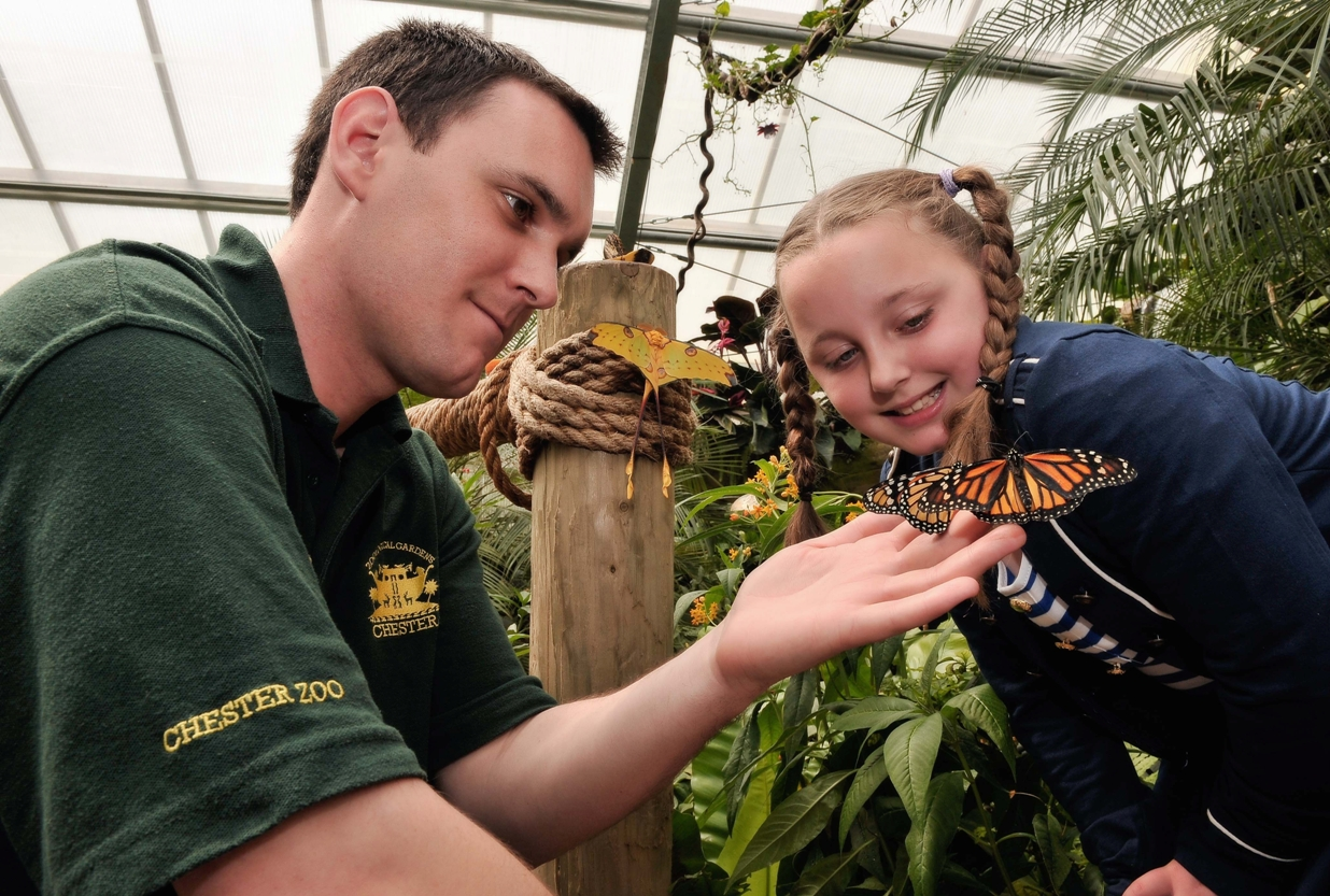 NORTH OF ENGLAND ZOOLOGICAL SOCIETY: Chester Zoo · Butterfly Journey · Presenters engage with visitors inside our tropical free-flying butterfly house. __________________________ Will Condliffe PR Officer (t): 01244 389462 (m): 07557744092 (e): w.condliffe@chesterzoo.org (w): www.chesterzoo.org Twitter: ChesterZoo_No1 / Facebook: www.facebook.com/chesterzoo1 Before printing, think about the environment Chester Zoo is a registered conservation and education charity. Our Vision is - A diverse, thriving and sustainable natural world. Our Mission is - To be a major force in conserving biodiversity worldwide. A Company Limited by Guarantee. Registered in England No. 287902. Registered Office: North of England Zoological Society, Chester Zoo, Upton-by-Chester, Chester, CH2-1LH. Registered Charity No. 306077. VAT No. 595 7286 79. Switchboard: 01244 380 280. Important Note: All documents attached to this email have been scanned for viruses by Postini. Please ensure that you also scan all messages, as Chester Zoo will not accept any liability for any contamination or damage to your systems. All information is supplied for your information only and is to be treated as strictly private and confidential. Please destroy this mail if you are not the intended recipient, and please notify the sender by phone on the above number.