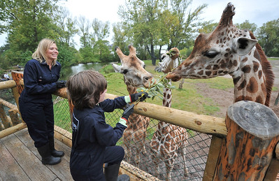 NORTH OF ENGLAND ZOOLOGICAL SOCIETY:Chester Zoo · Giraffe Feeding Platform · Visitors get up close and personal with the giraffes at Chester Zoo during one of the new Animal Encounters. __________________________ Will Condliffe PR Officer (t): 01244 389462 (m): 07557744092 (e): w.condliffe@chesterzoo.org (w): www.chesterzoo.org Twitter: ChesterZoo_No1 / Facebook: www.facebook.com/chesterzoo1 Before printing, think about the environment Chester Zoo is a registered conservation and education charity. Our Vision is - A diverse, thriving and sustainable natural world. Our Mission is - To be a major force in conserving biodiversity worldwide. A Company Limited by Guarantee. Registered in England No. 287902. Registered Office: North of England Zoological Society, Chester Zoo, Upton-by-Chester, Chester, CH2-1LH. Registered Charity No. 306077. VAT No. 595 7286 79. Switchboard: 01244 380 280. Important Note: All documents attached to this email have been scanned for viruses by Postini. Please ensure that you also scan all messages, as Chester Zoo will not accept any liability for any contamination or damage to your systems. All information is supplied for your information only and is to be treated as strictly private and confidential. Please destroy this mail if you are not the intended recipient, and please notify the sender by phone on the above number.