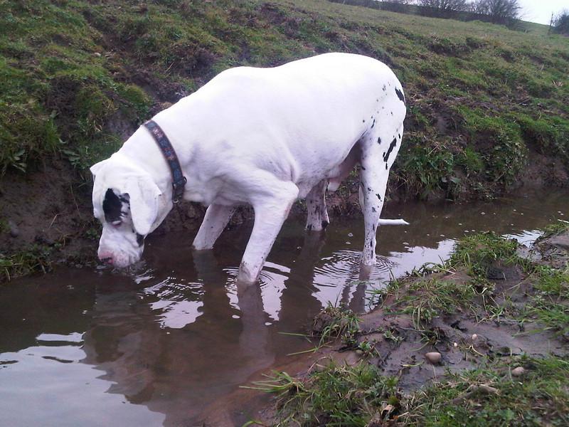 Washing muddy socks off.