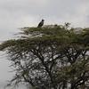 Kenya 0091