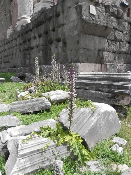 Forum gardens