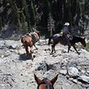 Pack horses are pretty amazing animals.  You point them in the right direction, but they pick the route through the rocks.