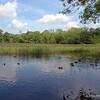 Ducks on the lake.