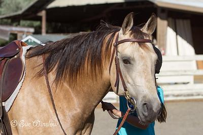 English Riding Clinic 2013