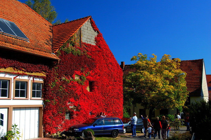 Red Vine Covered House in Germany