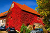 Red Vine Covered House
