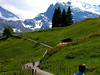 Murren Hiking Trail