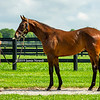 Runhappy--Proud Dame Yearling
