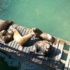 The sea lions are very territorial...They bark everytime one of them gets on or off the plank.