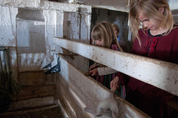 Kids feeding goats at the farm where we're staying.