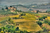 Italian Tuscan Vineyard