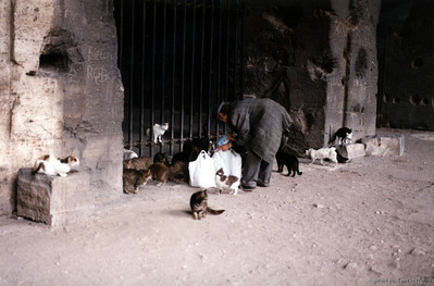 A man feeds the many feral cats hanging about the Colosseum in Rome.