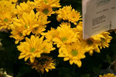 Evan's Flowers