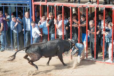 Bull Running Teulada Spain