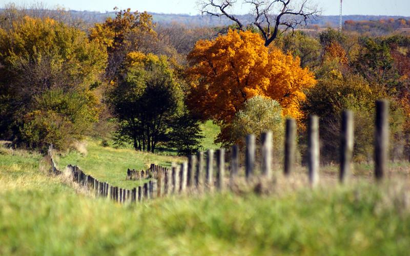 Autumn fenceline