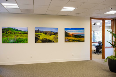 """From Left to Right: """"Lupines and Oaks Along Pacheco Pass"""" 34"""" x 51"""" HD Acrylic Print http://www.jharrisonphoto.com/Portfolio/Landscape-PhotographyPortfolio/i-DLJ5tZf  """"Oaks in Woodside"""" 34"""" x 51"""" HD Acrylic Print http://www.jharrisonphoto.com/Portfolio/Landscape-PhotographyPortfolio/i-HxvmtT5  """"Spring Sunset in the Marin Headlands""""  Mt Tam State Park, California 34"""" x 51"""" HD Acrylic Print http://www.jharrisonphoto.com/Portfolio/Landscape-PhotographyPortfolio/i-q224XHD"""