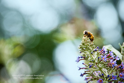 Bee and Bokeh (or Bee-keh)