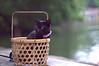 portable cat