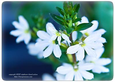Flowerbox Flowers