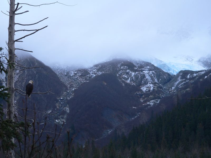 Eagle and Explorer Glacier in background