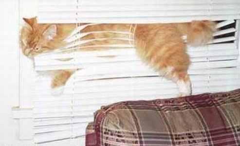 blinds fail