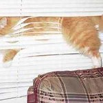 blinds fail
