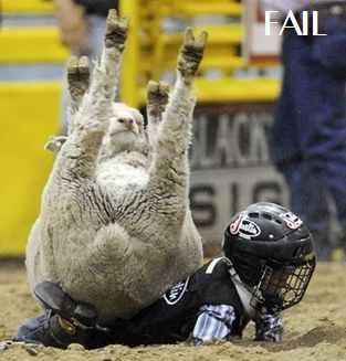 FAIL SHEEP