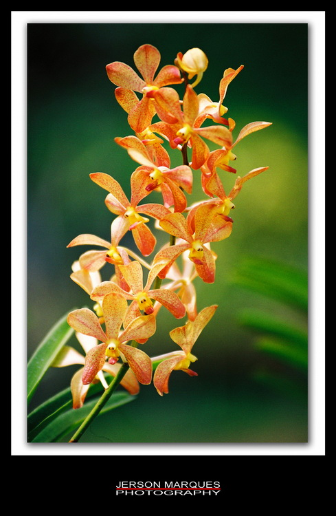 ORCHID-3