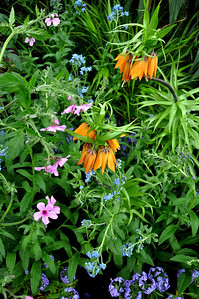 New York Botanical Gardens.